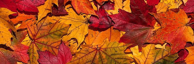 autumn_leaves_free_desktop_hd_wallpaper